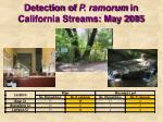 detection of p ramorum in california streams may 2005