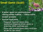 small game quail