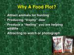 why a food plot