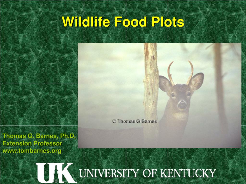 wildlife food plots l.