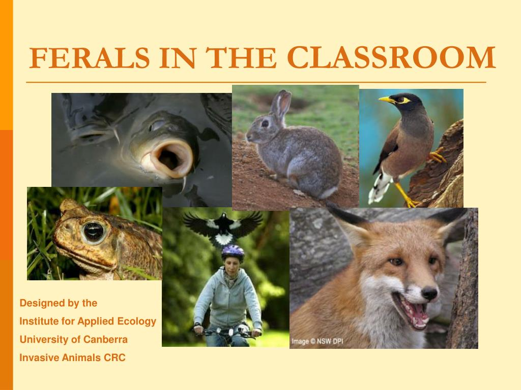 ferals in the classroom l.