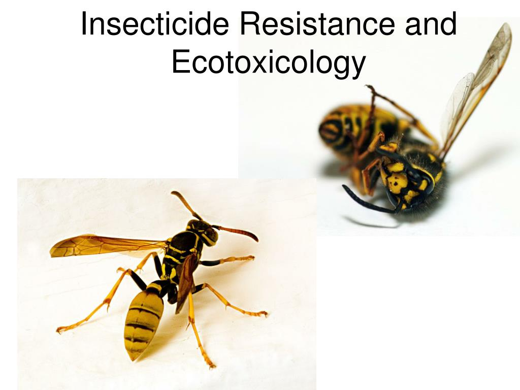 insecticide resistance and ecotoxicology l.