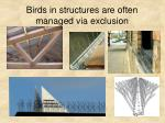 birds in structures are often managed via exclusion