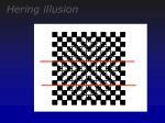 hering illusion