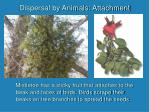 dispersal by animals attachment9