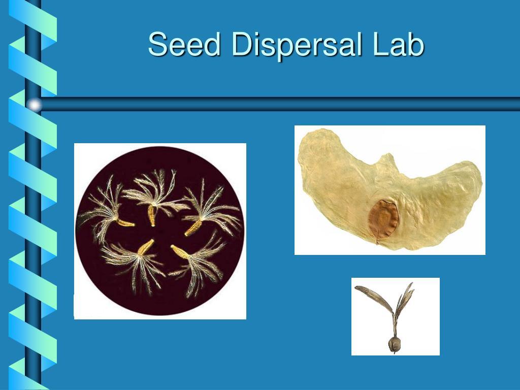 seed dispersal lab l.