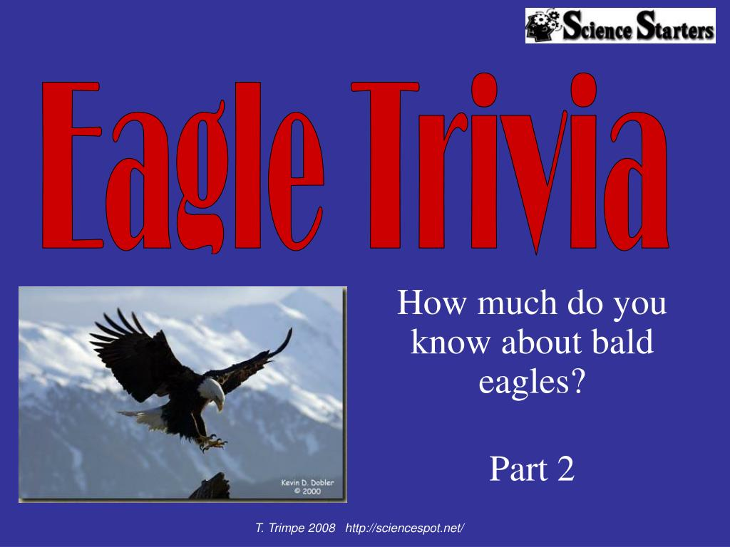 how much do you know about bald eagles part 2 l.