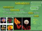 anthophytes