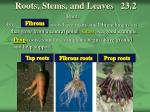 roots stems and leaves 23 2