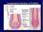 longitudinal section of follicle