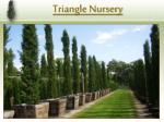 triangle nursery2
