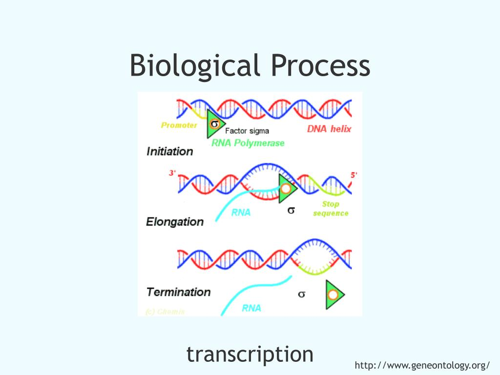 Biological Process