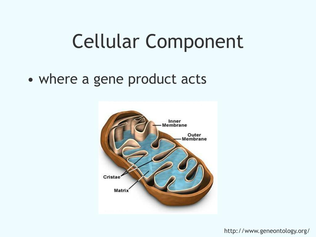 Cellular Component