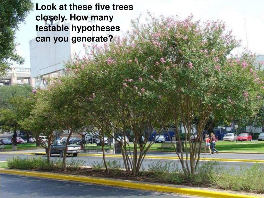 Look at these five trees closely. How many testable hypotheses can you generate?