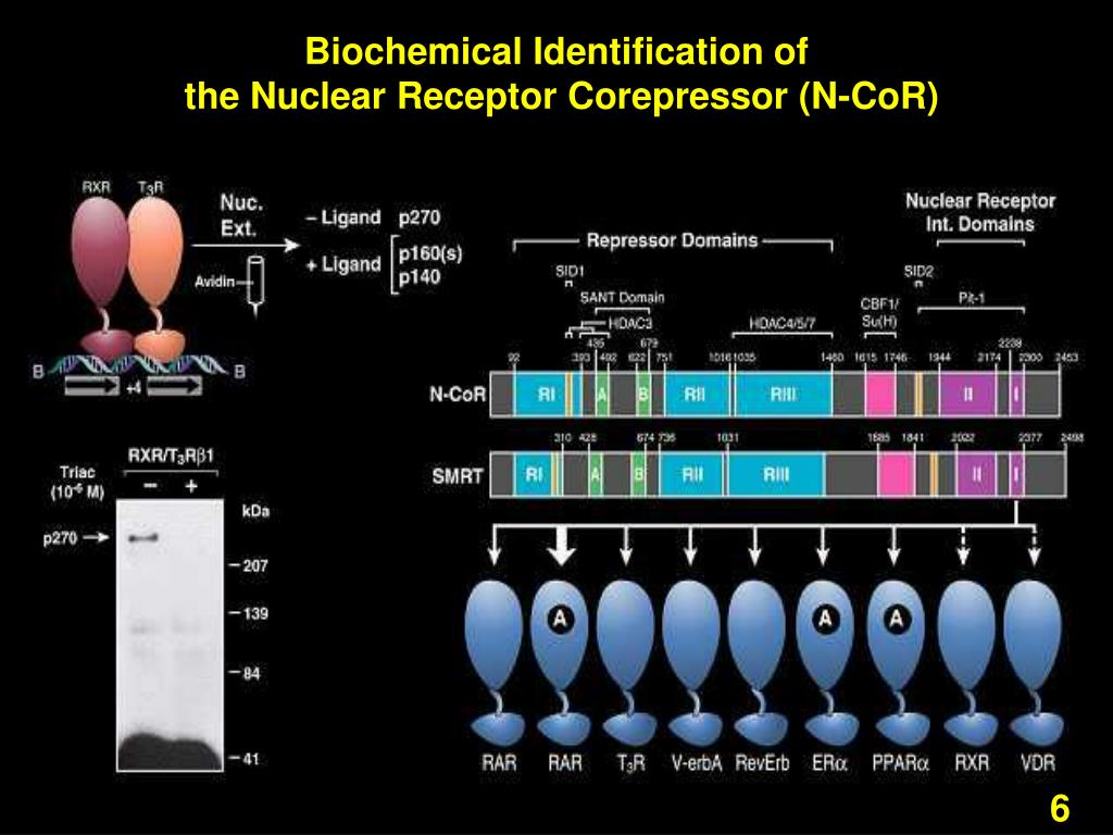 Biochemical Identification of