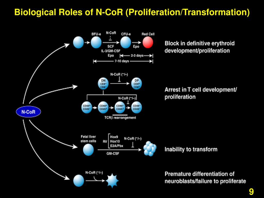 Biological Roles of N-CoR (Proliferation/Transformation)
