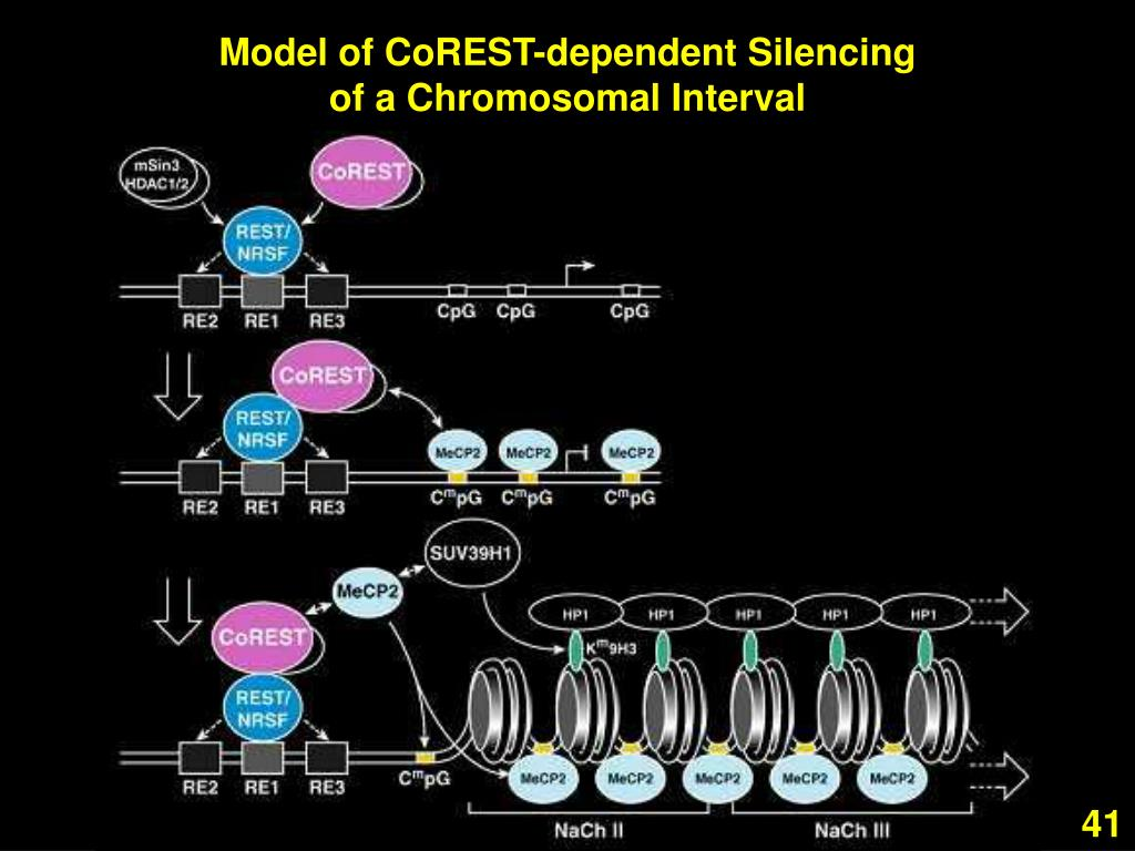Model of CoREST-dependent Silencing