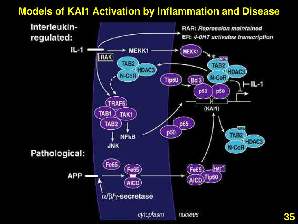 Models of KAI1 Activation by Inflammation and Disease