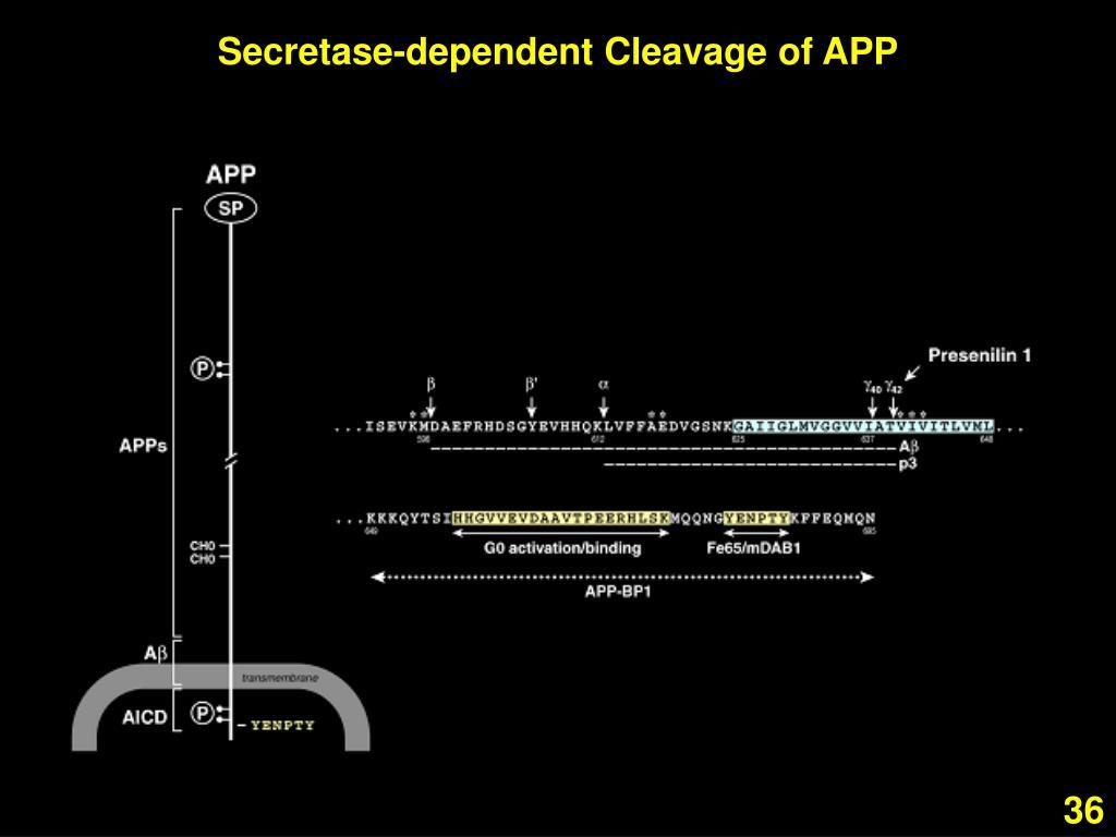 Secretase-dependent Cleavage of APP