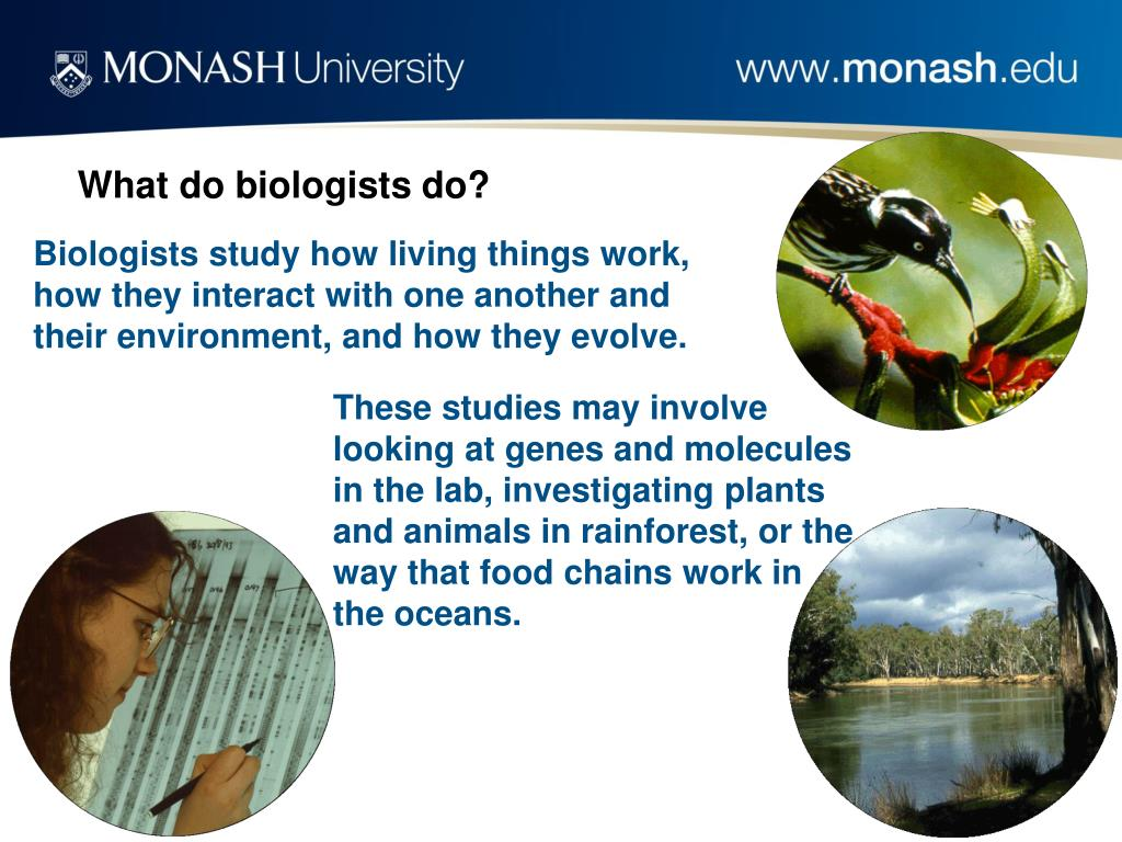 These studies may involve looking at genes and molecules in the lab, investigating plants and animals in rainforest, or the way that food chains work in the oceans.