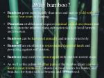 why bamboo