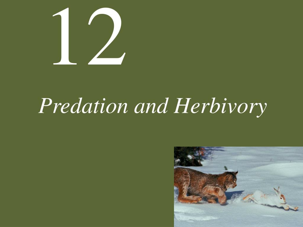 predation and herbivory l.