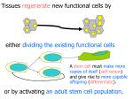 tissues regenerate new functional cells by