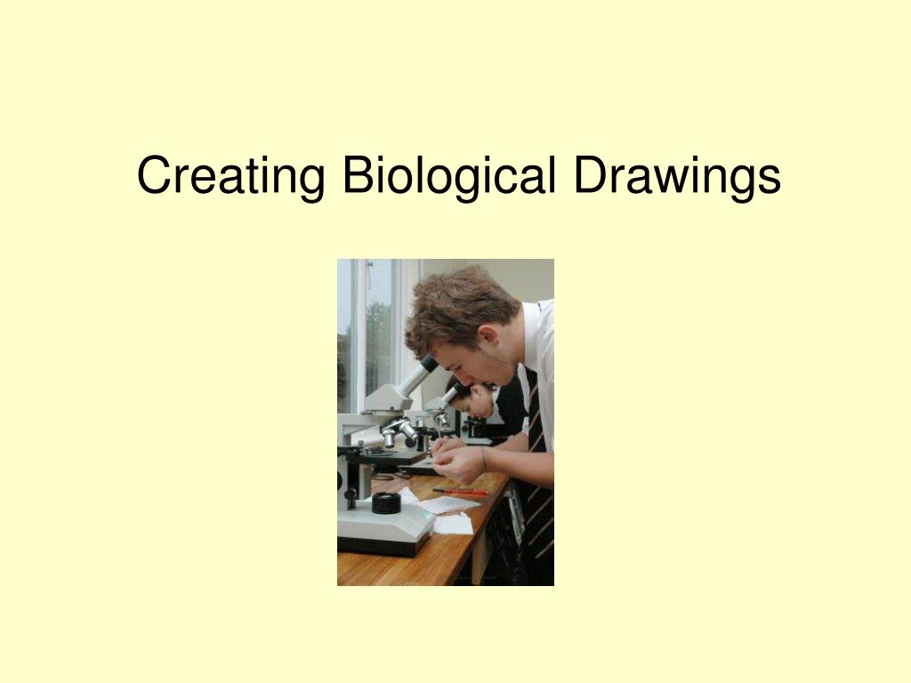 creating biological drawings l.