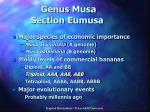 genus musa section eumusa
