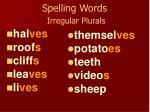 spelling words irregular plurals1