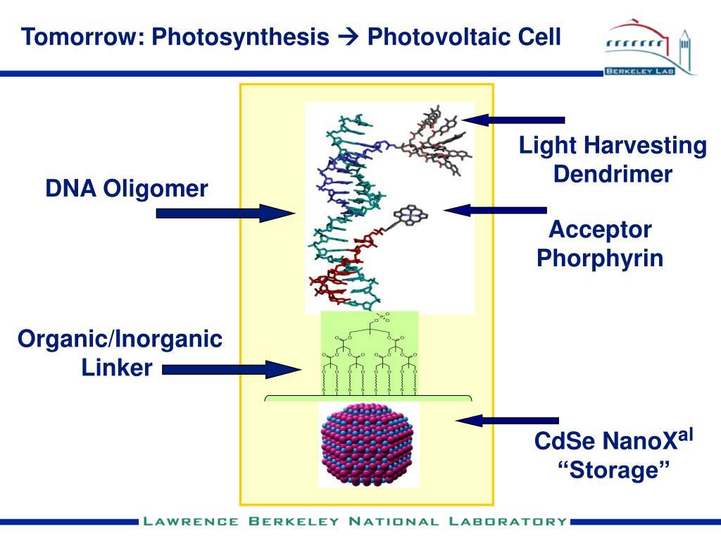 Tomorrow: Photosynthesis