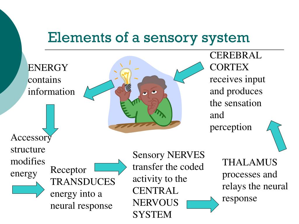 Elements of a sensory system