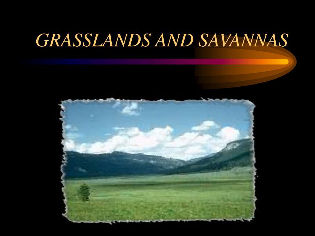 grasslands and savannas l.