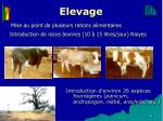 elevage