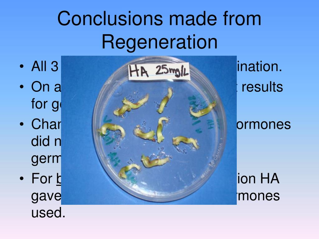 Conclusions made from Regeneration