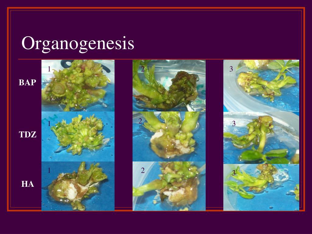 Organogenesis