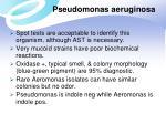 pseudomonas aeruginosa4