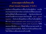 plant growth regulator p g r11