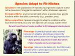 species adapt to fit niches