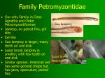 family petromyzontidae
