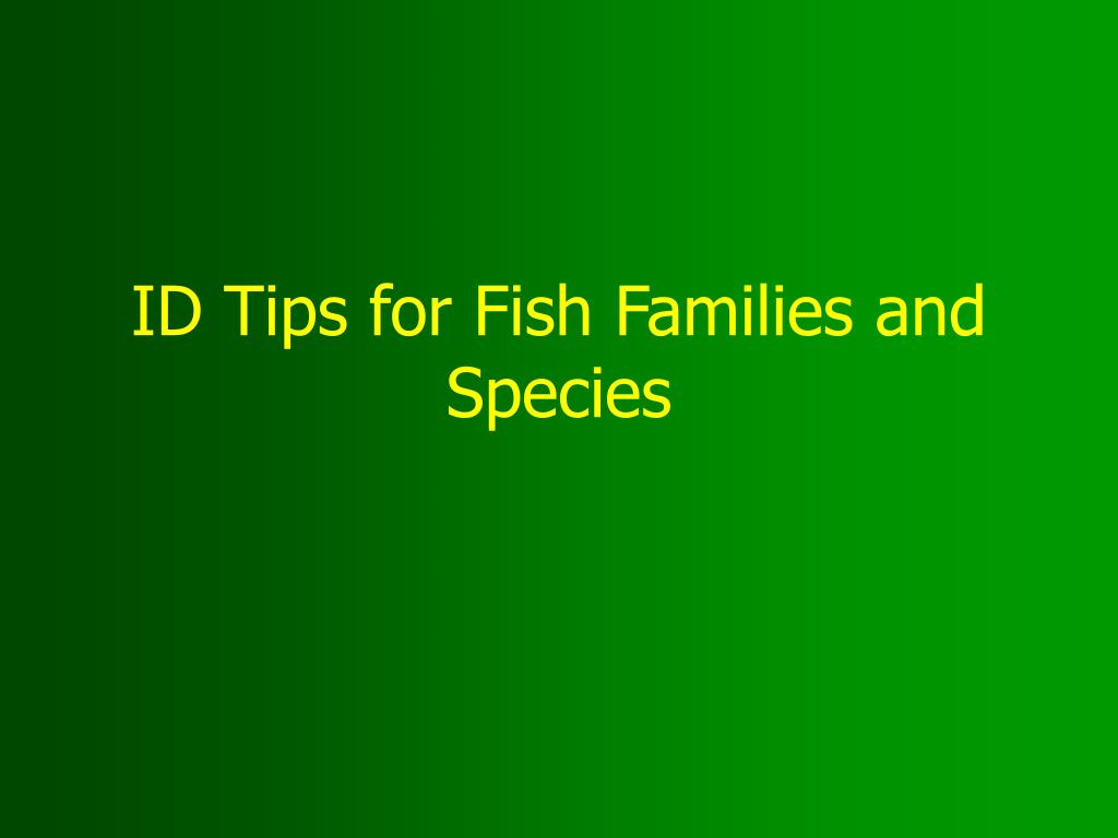 id tips for fish families and species l.