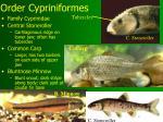 order cypriniformes14