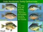 order perciformes family centrarchidae