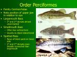order perciformes21