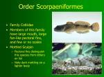 order scorpaeniformes