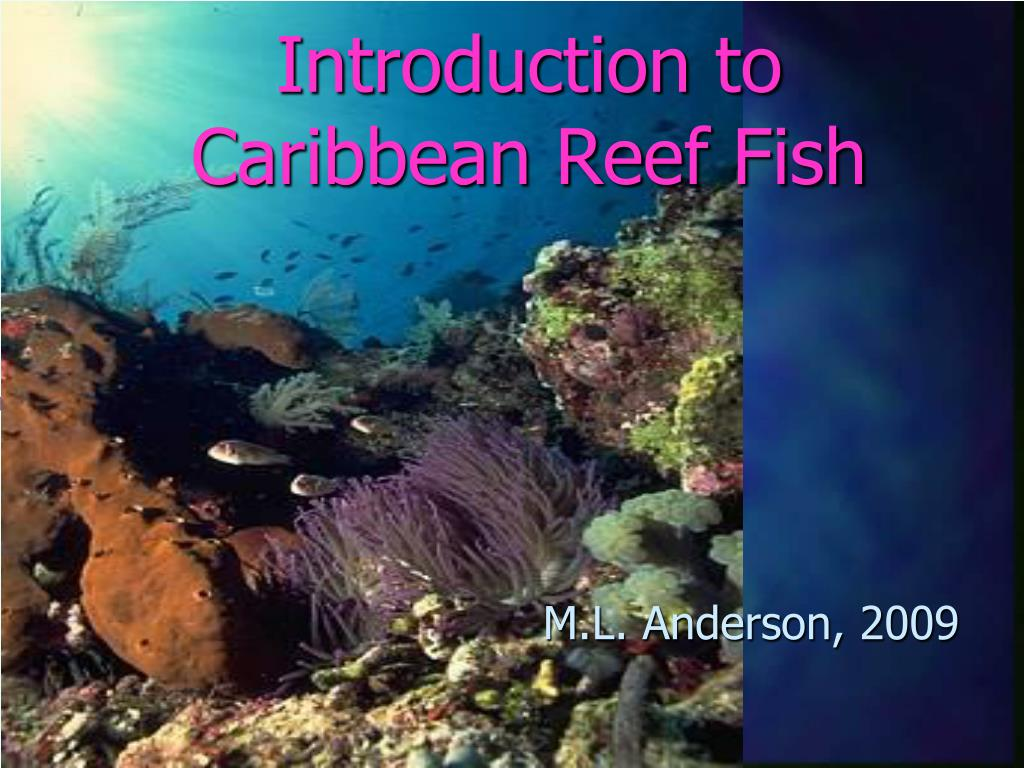 introduction to caribbean reef fish l.