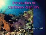 introduction to caribbean reef fish