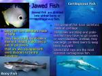 reef fish jawed fish