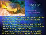 reef fish16