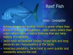 reef fish20